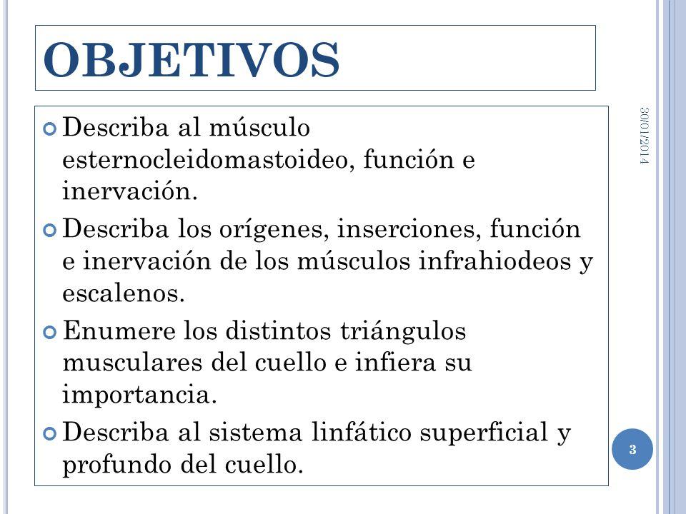 OBJETIVOS Describa al músculo esternocleidomastoideo, función e inervación. Describa los orígenes, inserciones, función e inervación de los músculos i