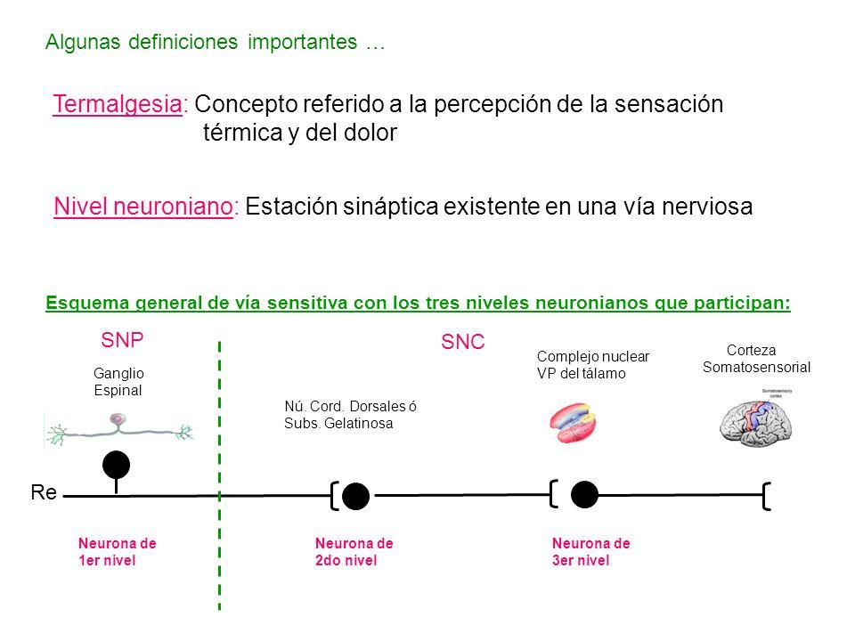 Algunas definiciones importantes … Termalgesia: Concepto referido a la percepción de la sensación térmica y del dolor Nivel neuroniano: Estación sináp