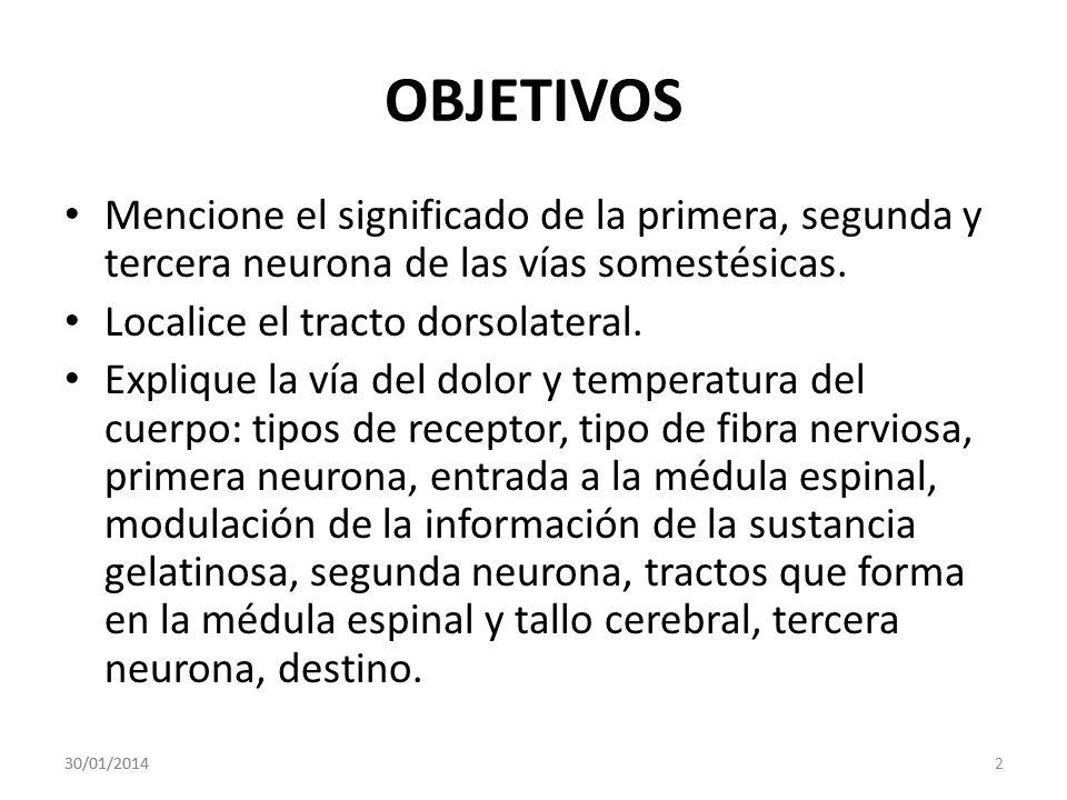 OBJETIVOS Mencione el significado de la primera, segunda y tercera neurona de las vías somestésicas. Localice el tracto dorsolateral. Explique la vía