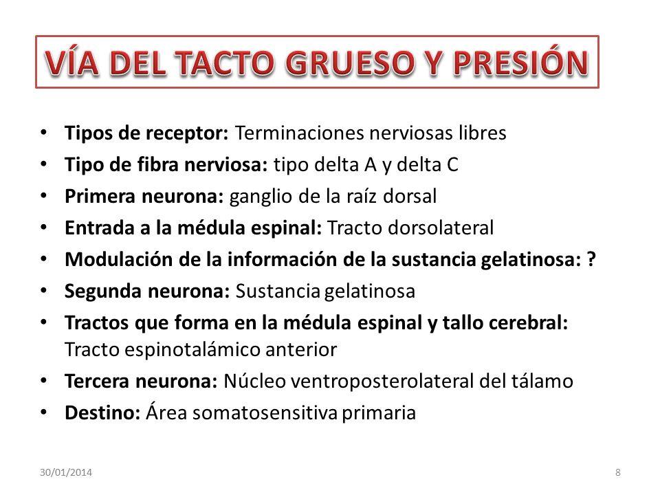 Tipos de receptor: Terminaciones nerviosas libres Tipo de fibra nerviosa: tipo delta A y delta C Primera neurona: ganglio de la raíz dorsal Entrada a