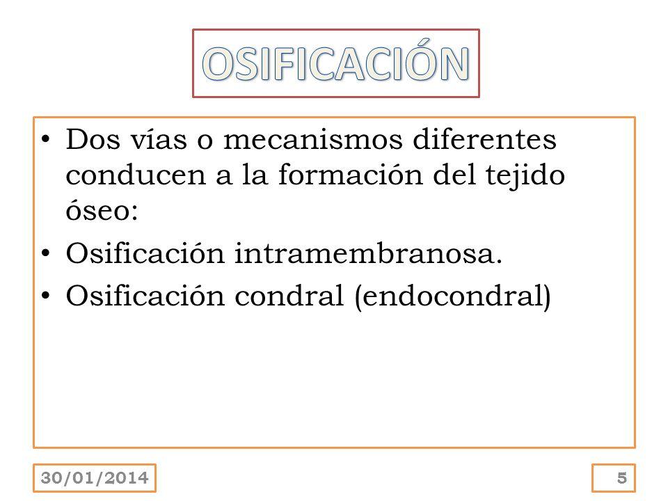 Dos vías o mecanismos diferentes conducen a la formación del tejido óseo: Osificación intramembranosa. Osificación condral (endocondral) 30/01/20145