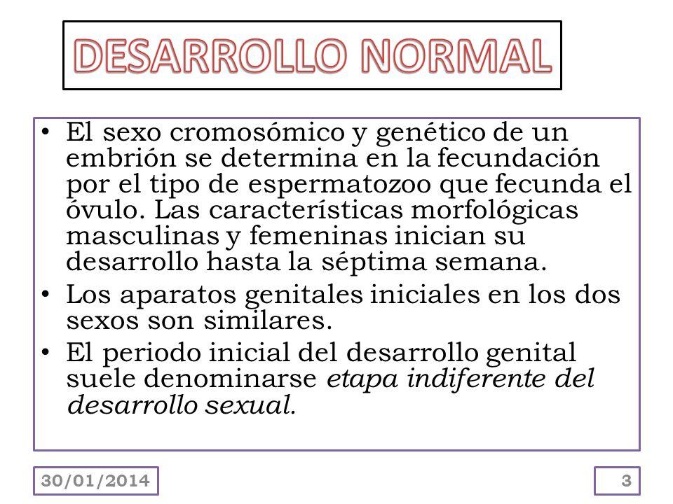 El sexo cromosómico y genético de un embrión se determina en la fecundación por el tipo de espermatozoo que fecunda el óvulo. Las características morf