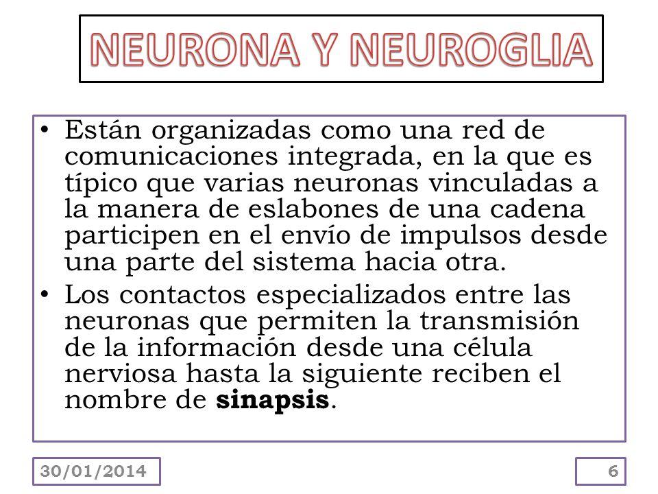 Dentro del SNC, las células de sostén reciben el nombre de neuroglia ó células gliales.