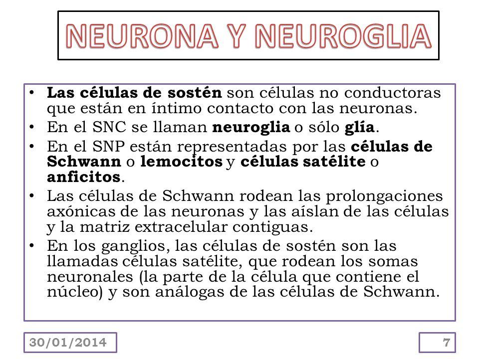 Las células de sostén son células no conductoras que están en íntimo contacto con las neuronas. En el SNC se llaman neuroglia o sólo glía. En el SNP e