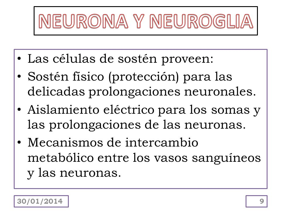 Las células de sostén proveen: Sostén físico (protección) para las delicadas prolongaciones neuronales. Aislamiento eléctrico para los somas y las pro