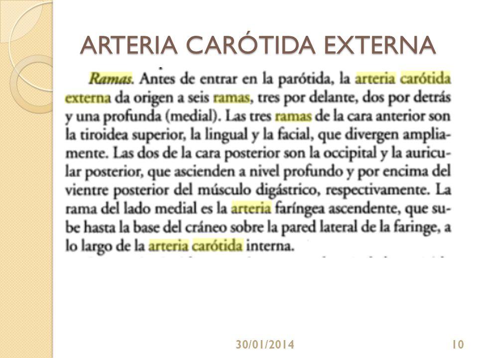 ARTERIA CARÓTIDA EXTERNA 30/01/201410