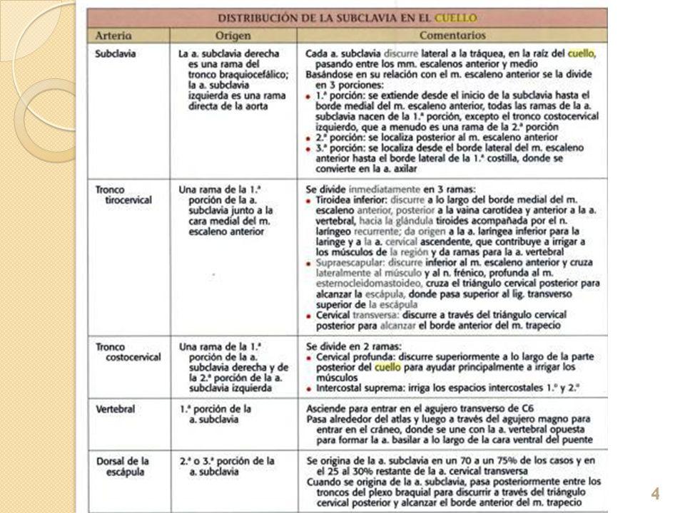 PLEXO CERVICAL 30/01/201415
