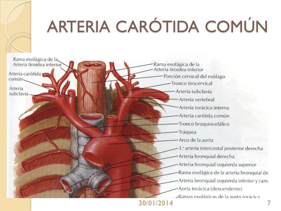 ARTERIA CARÓTIDA COMÚN 30/01/20147