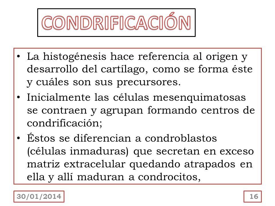 La histogénesis hace referencia al origen y desarrollo del cartílago, como se forma éste y cuáles son sus precursores. Inicialmente las células mesenq