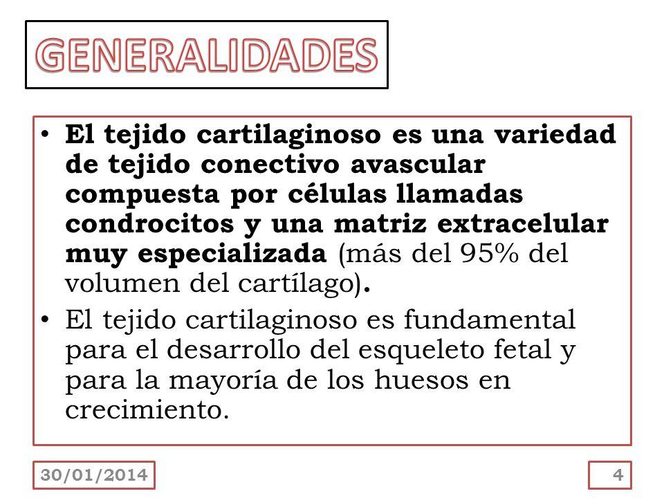 30/01/201425 El cartílago carece de vasos sanguíneos y por lo tanto, el intercambio de metabolitos entre los condrocitos y los tejidos circundantes depende de la difusión de los mismos en el agua contenida en la sustancia fundamental.