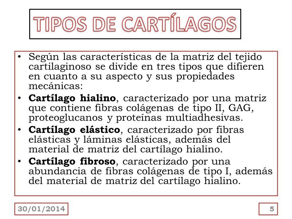 Según las características de la matriz del tejido cartilaginoso se divide en tres tipos que difieren en cuanto a su aspecto y sus propiedades mecánica