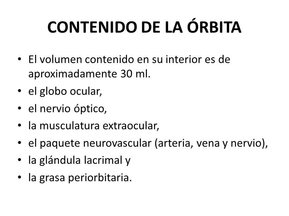 CONTENIDO DE LA ÓRBITA El volumen contenido en su interior es de aproximadamente 30 ml. el globo ocular, el nervio óptico, la musculatura extraocular,