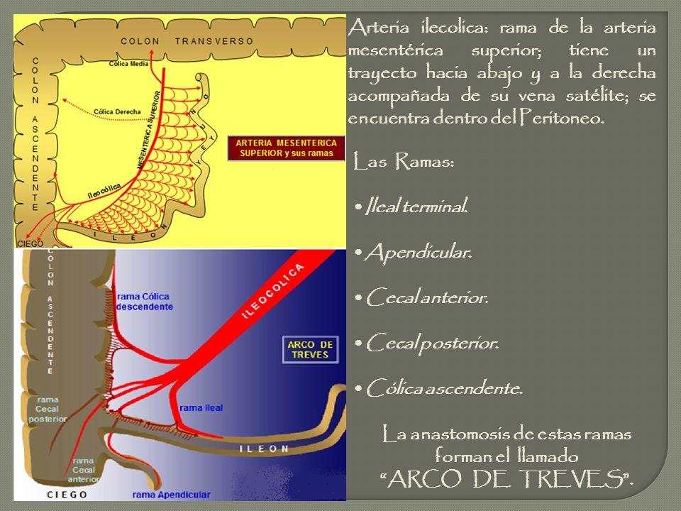 Las Ramas: Ileal terminal. Apendicular. Cecal anterior. Cecal posterior. Cólica ascendente. La anastomosis de estas ramas forman el llamado ARCO DE TR