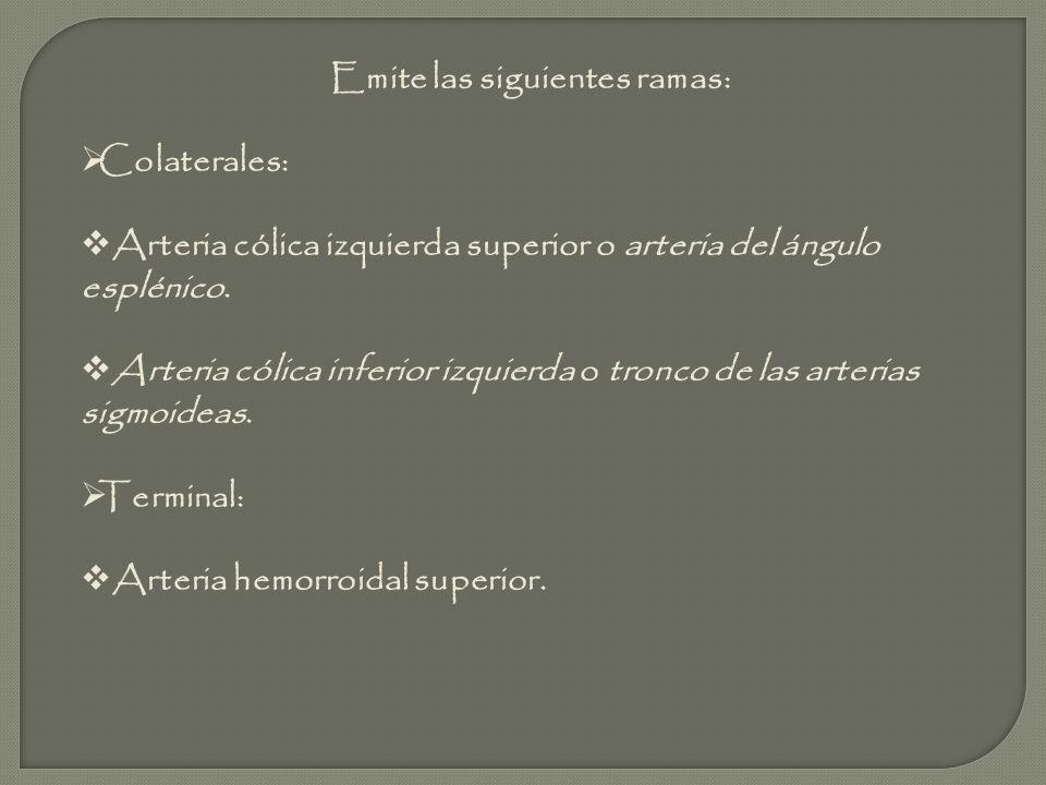 1, Arteria Marginal 2, Arco de Riolano 3, Arteria Mesentérica Inferior 4, Arteria Cólica Izquierda 5, Arterias Sigmoideas 6, Arterias Rectales Superiores 7, Vasos Rectos 8, Arteria Cólica Media 9, Arteria Mesentérica Superior 10, Rama Ascendente de la Arteria Cólica Izquierda 11, Rama Descendente de la Arteria Cólica Izquierda 12, Arterias Recto sigmoideas 13, Arteria Rectal Media 14, Arteria Rectal Inferior.