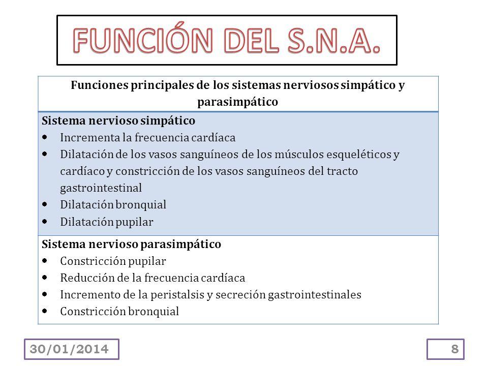 8 Funciones principales de los sistemas nerviosos simpático y parasimpático Sistema nervioso simpático Incrementa la frecuencia cardíaca Dilatación de