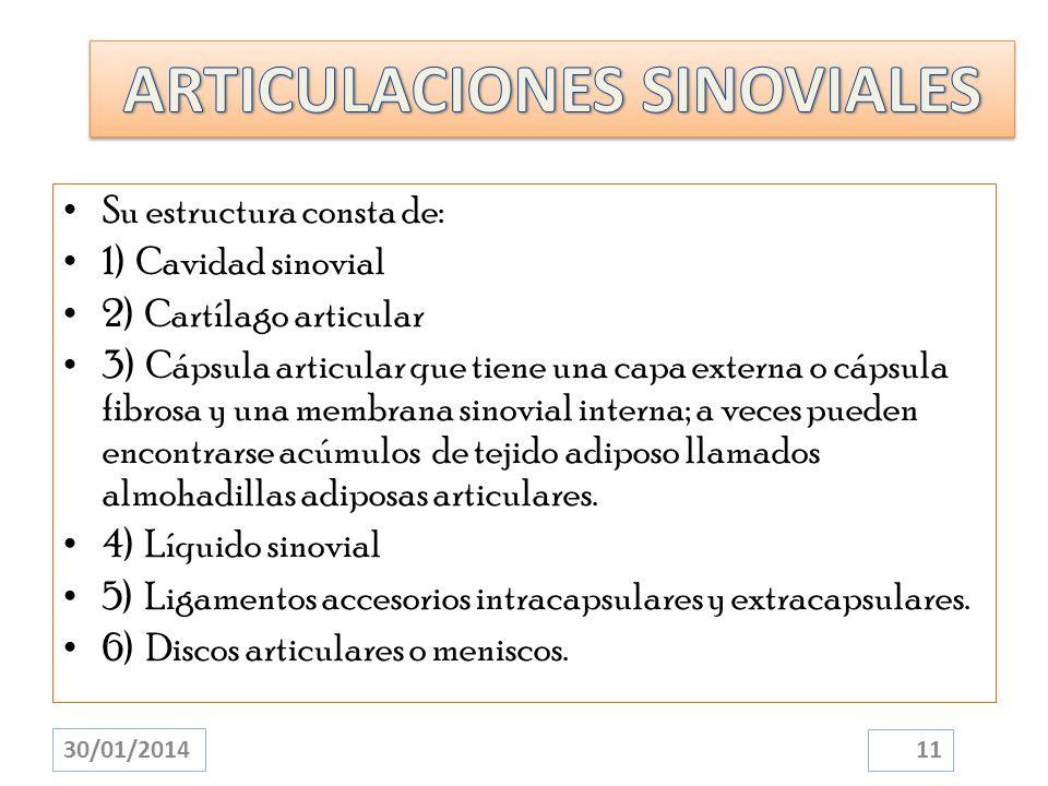 Su estructura consta de: 1) Cavidad sinovial 2) Cartílago articular 3) Cápsula articular que tiene una capa externa o cápsula fibrosa y una membrana s