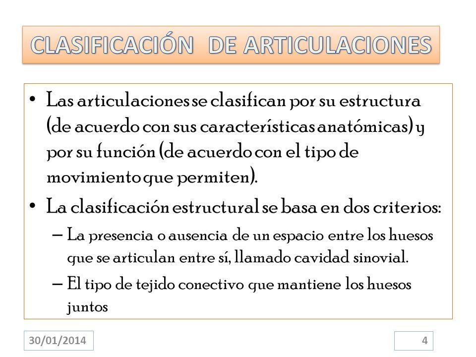 Las articulaciones se clasifican por su estructura (de acuerdo con sus características anatómicas) y por su función (de acuerdo con el tipo de movimie
