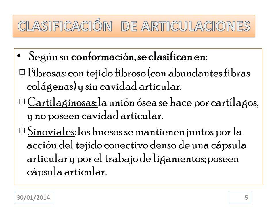 Según su conformación, se clasifican en: Fibrosas: con tejido fibroso (con abundantes fibras colágenas) y sin cavidad articular. Cartilaginosas: la un
