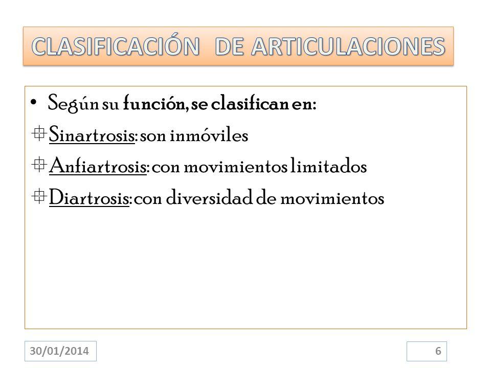 Según su función, se clasifican en: Sinartrosis: son inmóviles Anfiartrosis: con movimientos limitados Diartrosis: con diversidad de movimientos 30/01