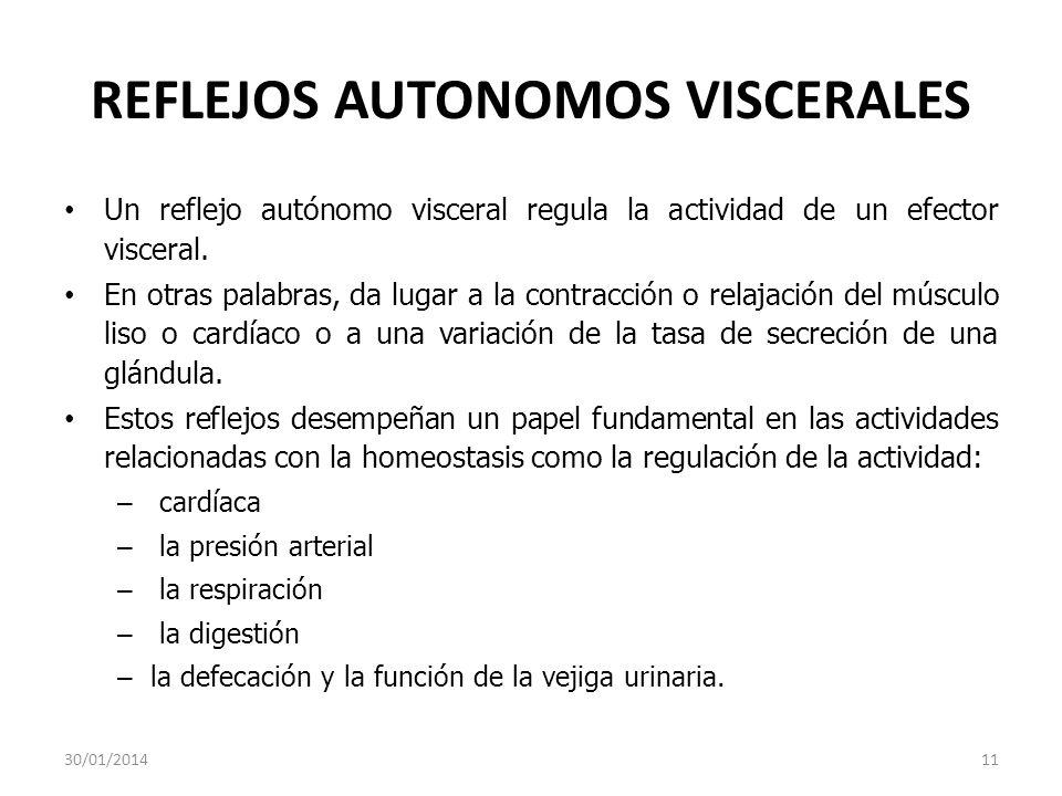 REFLEJOS AUTONOMOS VISCERALES Un reflejo autónomo visceral regula la actividad de un efector visceral. En otras palabras, da lugar a la contracción o