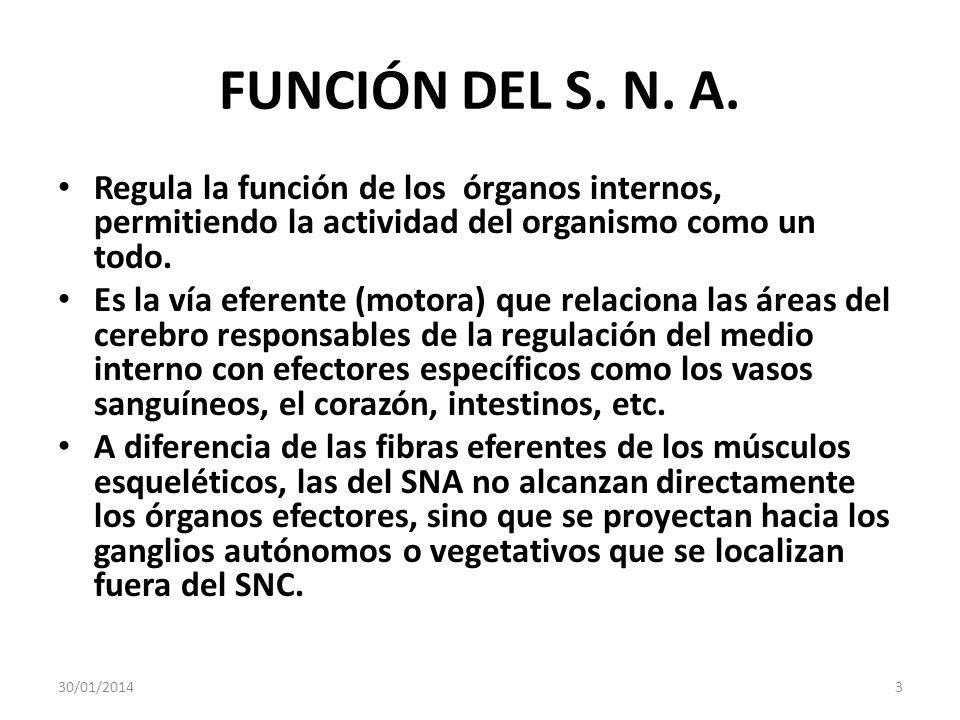 FUNCIÓN DEL S. N. A. Regula la función de los órganos internos, permitiendo la actividad del organismo como un todo. Es la vía eferente (motora) que r