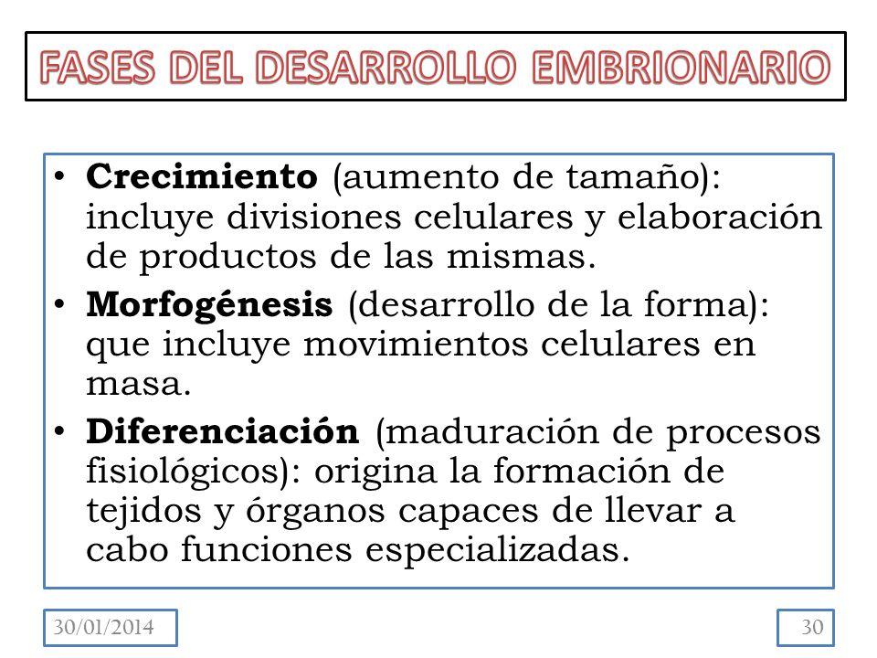 Crecimiento (aumento de tamaño): incluye divisiones celulares y elaboración de productos de las mismas.