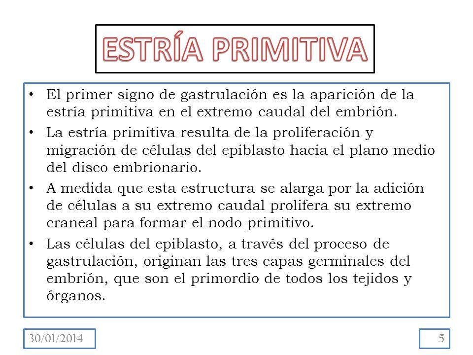 El primer signo de gastrulación es la aparición de la estría primitiva en el extremo caudal del embrión.