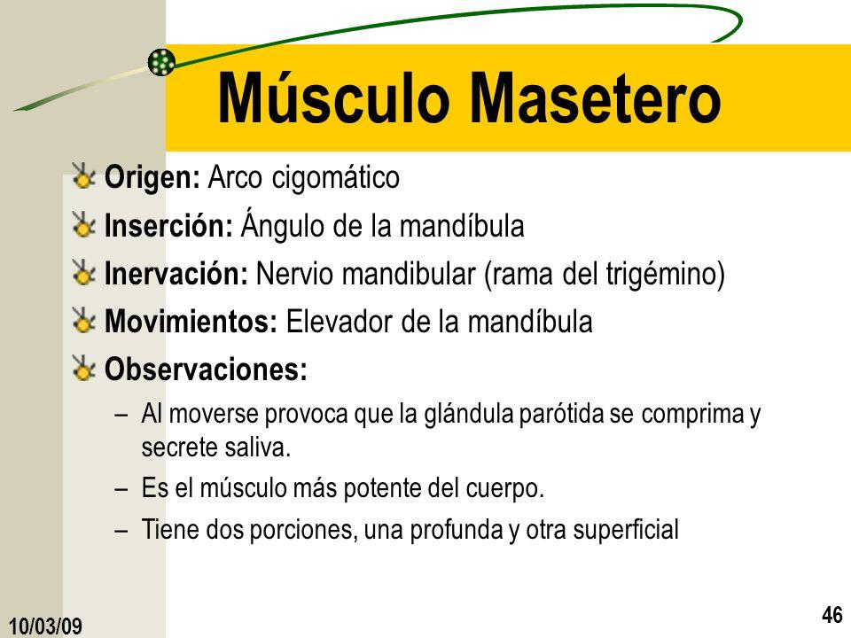 10/03/09 46 Músculo Masetero Origen: Arco cigomático Inserción: Ángulo de la mandíbula Inervación: Nervio mandibular (rama del trigémino) Movimientos: