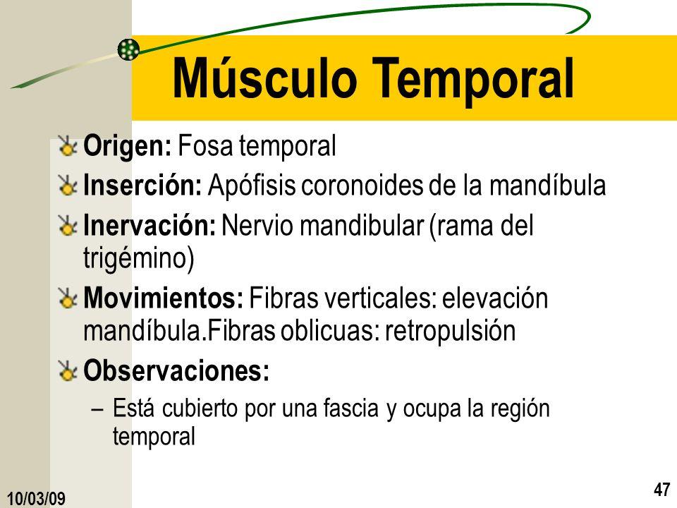 10/03/09 47 Músculo Temporal Origen: Fosa temporal Inserción: Apófisis coronoides de la mandíbula Inervación: Nervio mandibular (rama del trigémino) M