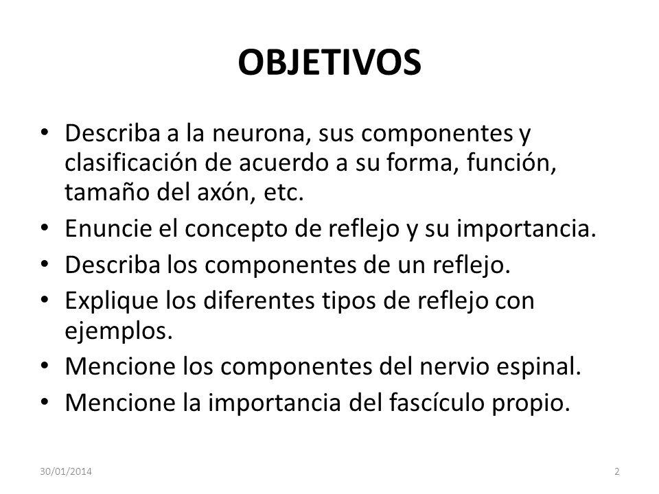 OBJETIVOS Describa a la neurona, sus componentes y clasificación de acuerdo a su forma, función, tamaño del axón, etc. Enuncie el concepto de reflejo