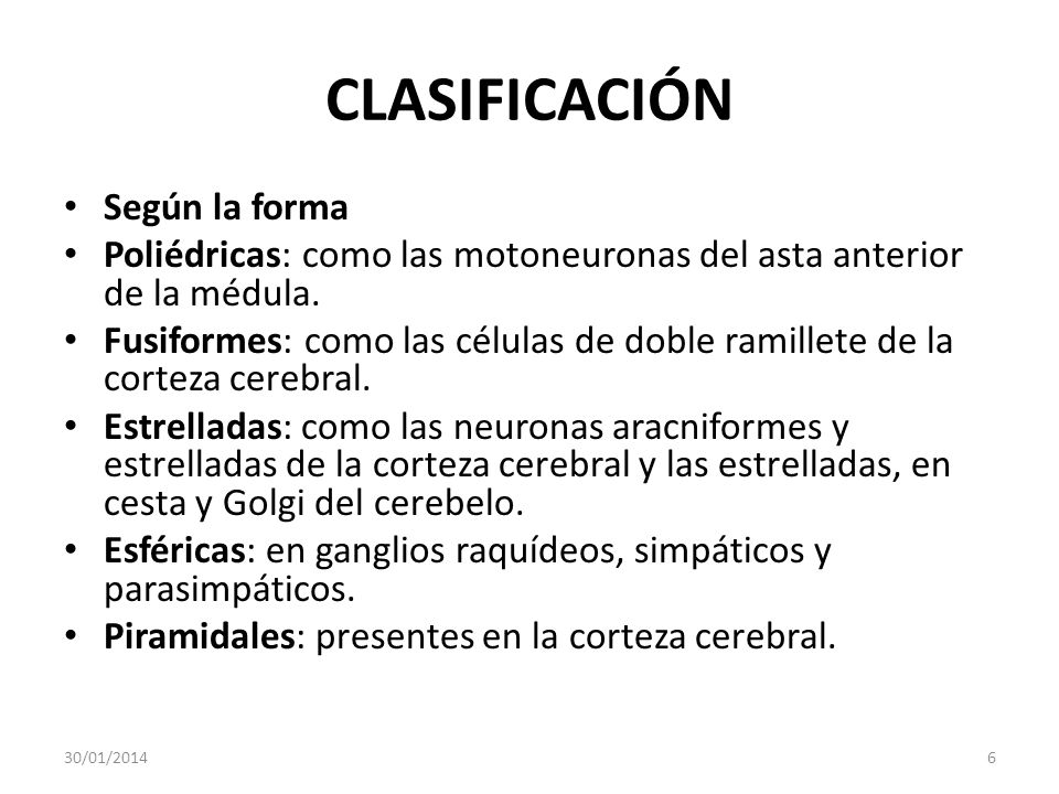 CLASIFICACIÓN Según la forma Poliédricas: como las motoneuronas del asta anterior de la médula. Fusiformes: como las células de doble ramillete de la