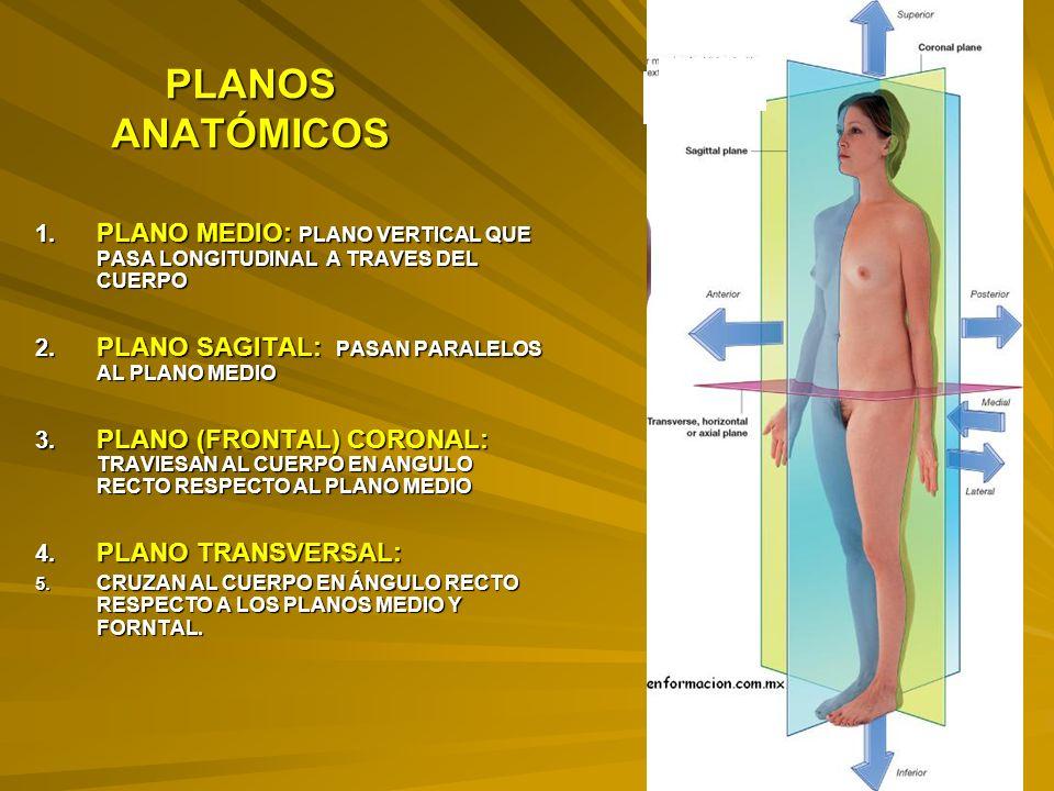PLANOS ANATÓMICOS 1.PLANO MEDIO: PLANO VERTICAL QUE PASA LONGITUDINAL A TRAVES DEL CUERPO 2.