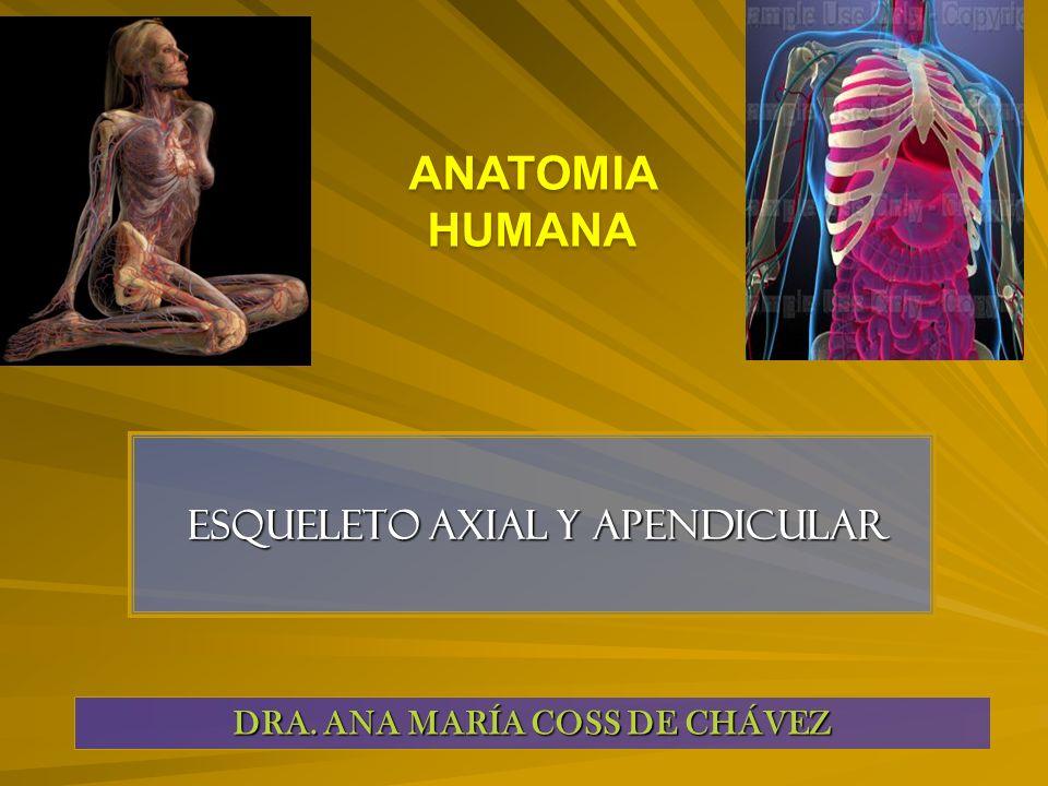 Esqueleto axial y apendicular Esqueleto axial y apendicular DRA.