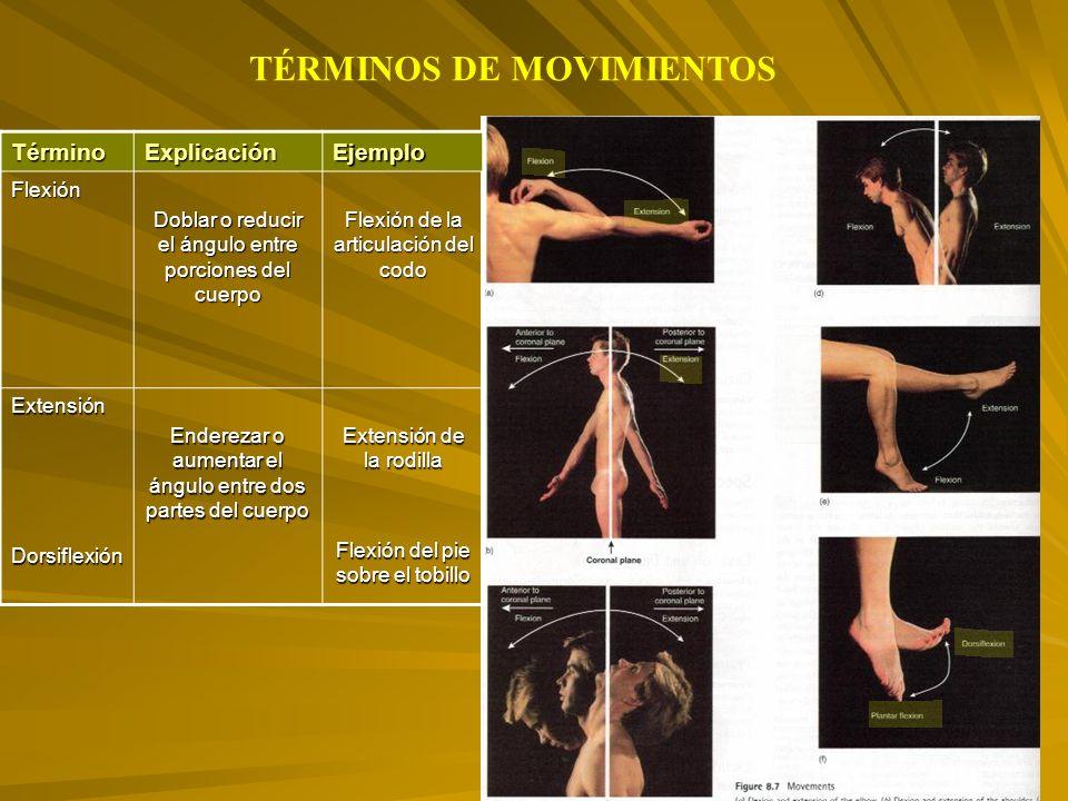 TérminoExplicaciónEjemploFlexión Doblar o reducir el ángulo entre porciones del cuerpo Flexión de la articulación del codo ExtensiónDorsiflexión Enderezar o aumentar el ángulo entre dos partes del cuerpo Extensión de la rodilla Flexión del pie sobre el tobillo TÉRMINOS DE MOVIMIENTOS