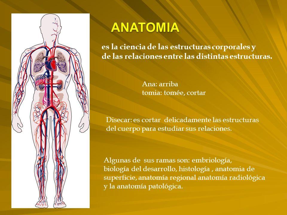 es la ciencia de las estructuras corporales y de las relaciones entre las distintas estructuras.