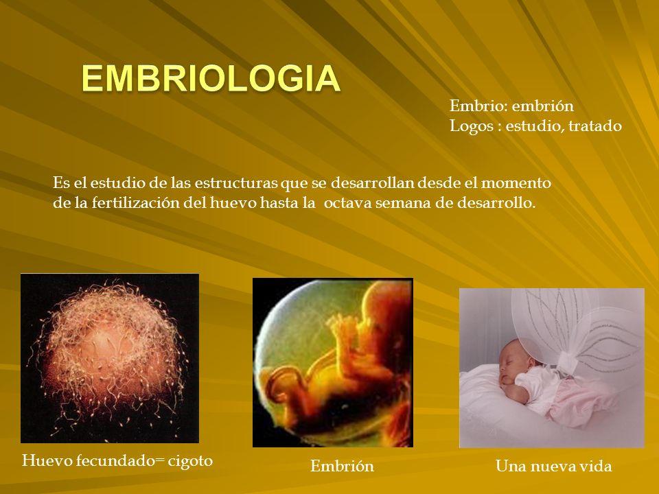 Embrio: embrión Logos : estudio, tratado Es el estudio de las estructuras que se desarrollan desde el momento de la fertilización del huevo hasta la octava semana de desarrollo.