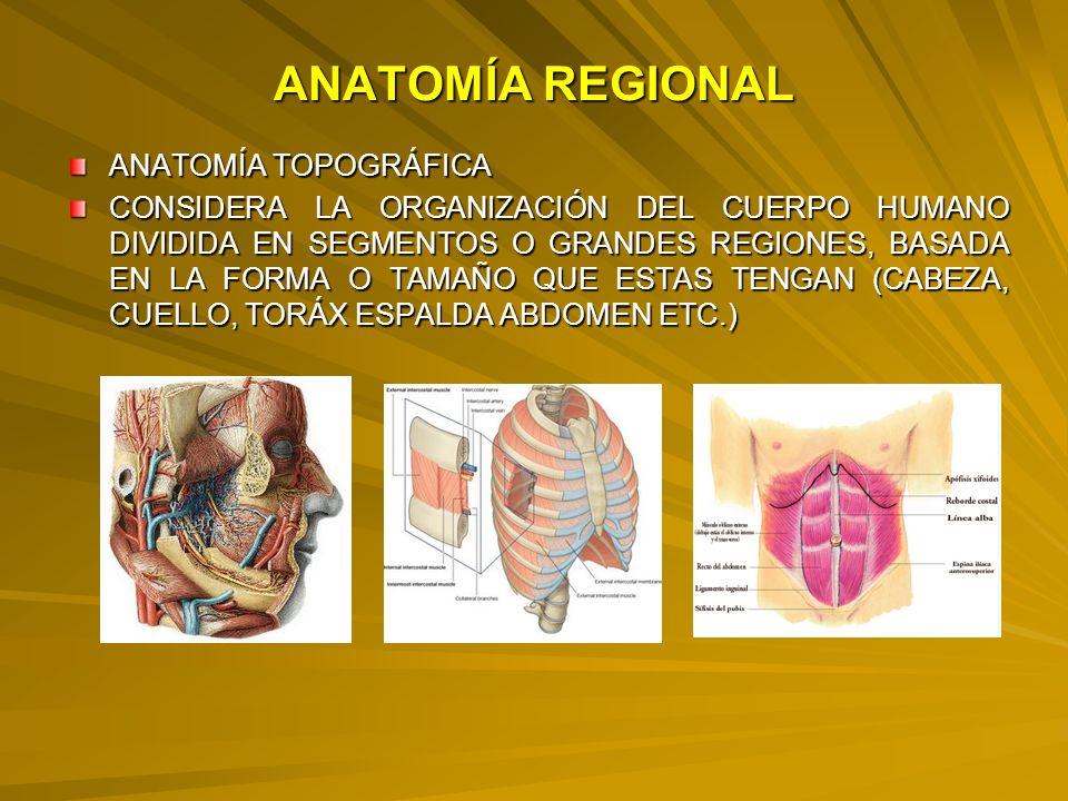 Enunciar el concepto de huesos: largos, cortos, planos e irregulares y dar algunos ejemplos con esquemas.