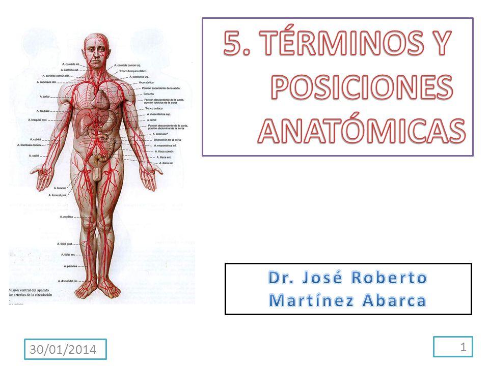 Términos de lateralidad Las estructuras pares con miembros derecho e izquierdo (p.