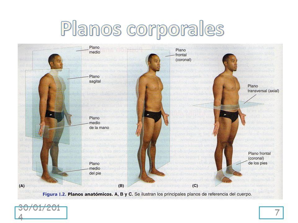 Superficial, intermedio y profundo describen la posición de estructuras en relación con la superficie corporal o en relación con otra estructura subyacente o suprayacente.