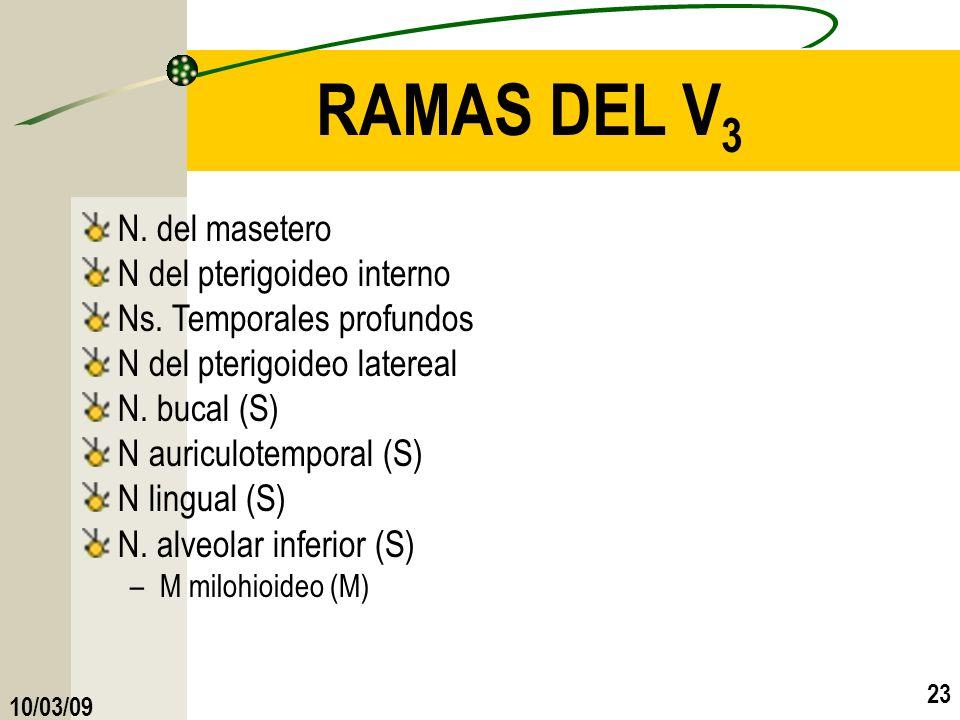 10/03/09 23 RAMAS DEL V 3 N. del masetero N del pterigoideo interno Ns. Temporales profundos N del pterigoideo latereal N. bucal (S) N auriculotempora