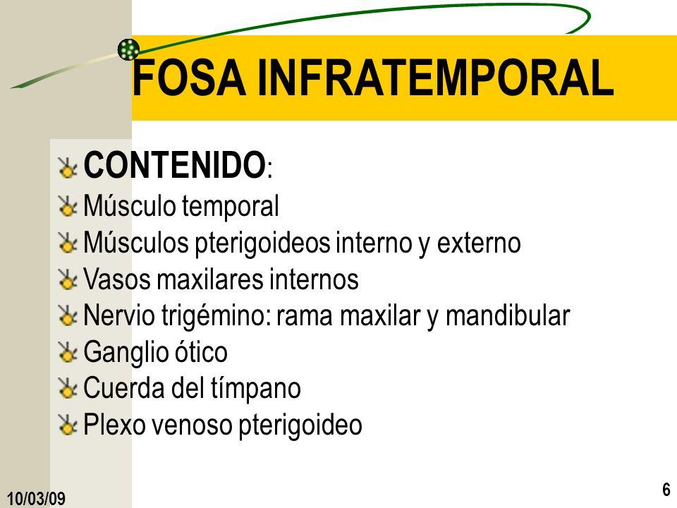 10/03/09 6 FOSA INFRATEMPORAL CONTENIDO : Músculo temporal Músculos pterigoideos interno y externo Vasos maxilares internos Nervio trigémino: rama max