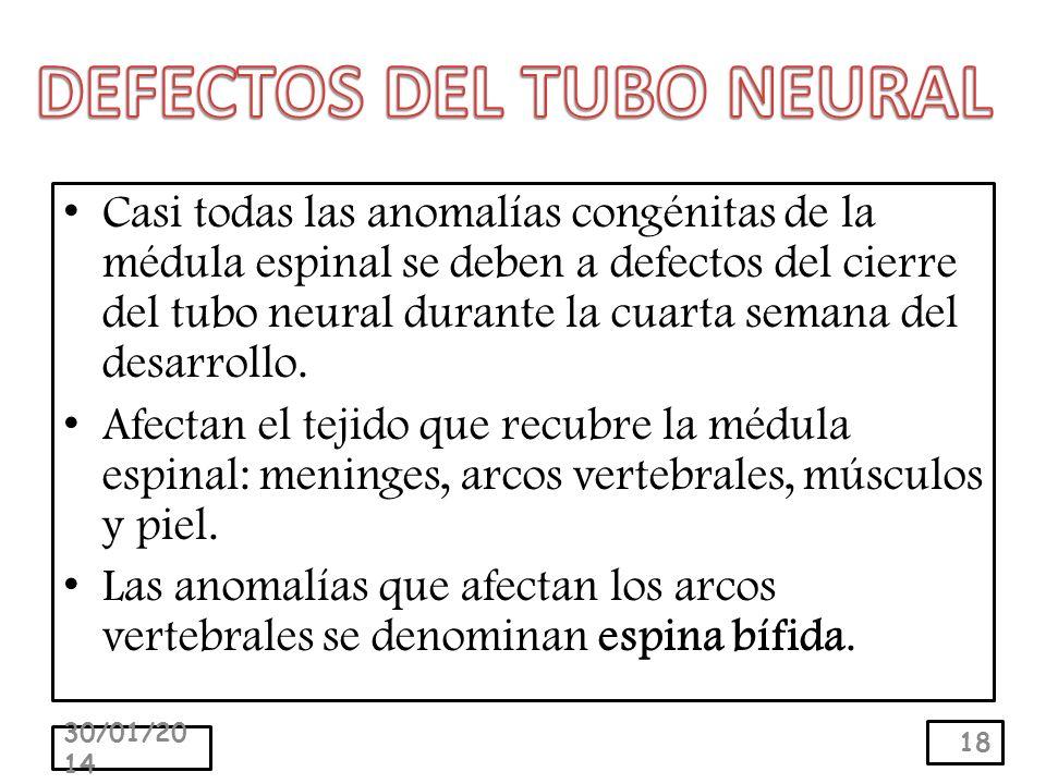 Casi todas las anomalías congénitas de la médula espinal se deben a defectos del cierre del tubo neural durante la cuarta semana del desarrollo.