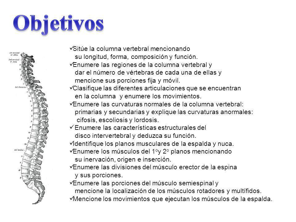 Sitúe la columna vertebral mencionando su longitud, forma, composición y función. Enumere las regiones de la columna vertebral y dar el número de vért