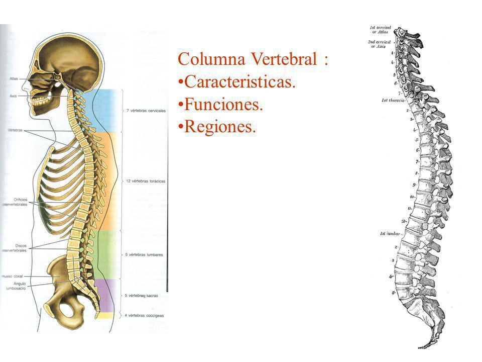 Columna Vertebral : Caracteristicas. Funciones. Regiones.