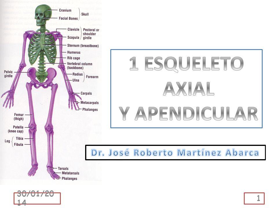 Que el estudiante: Enuncie el concepto de esqueleto axil y apendicular.