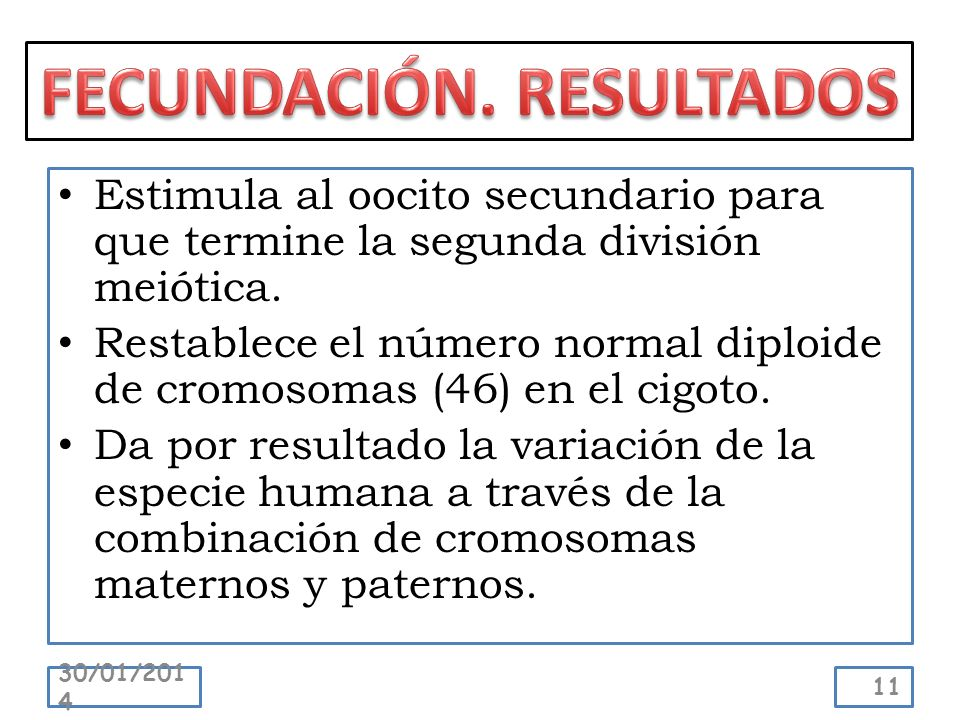 Estimula al oocito secundario para que termine la segunda división meiótica. Restablece el número normal diploide de cromosomas (46) en el cigoto. Da