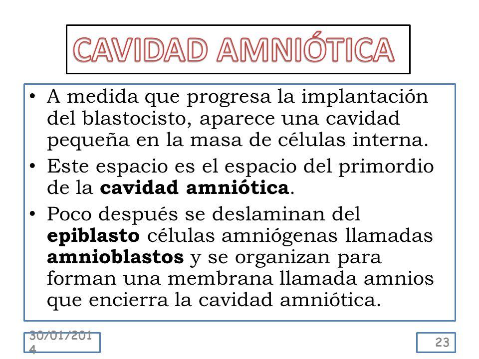 A medida que progresa la implantación del blastocisto, aparece una cavidad pequeña en la masa de células interna. Este espacio es el espacio del primo