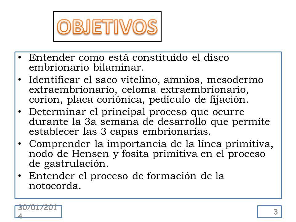 Entender como está constituido el disco embrionario bilaminar. Identificar el saco vitelino, amnios, mesodermo extraembrionario, celoma extraembrionar