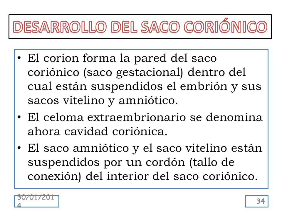 El corion forma la pared del saco coriónico (saco gestacional) dentro del cual están suspendidos el embrión y sus sacos vitelino y amniótico. El celom