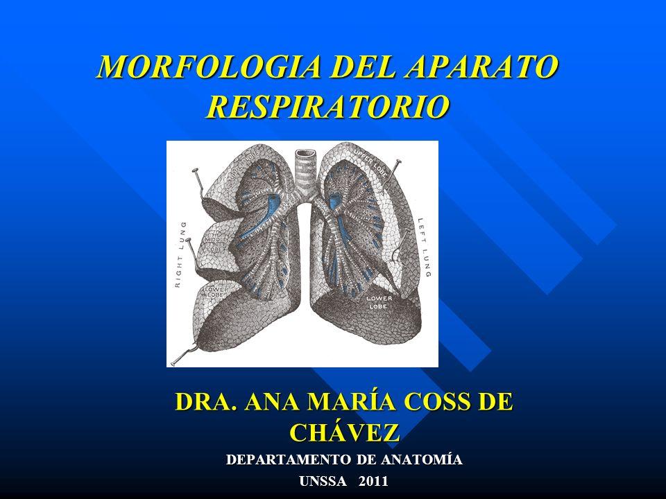 MORFOLOGIA DEL APARATO RESPIRATORIO DRA. ANA MARÍA COSS DE CHÁVEZ DEPARTAMENTO DE ANATOMÍA UNSSA 2011